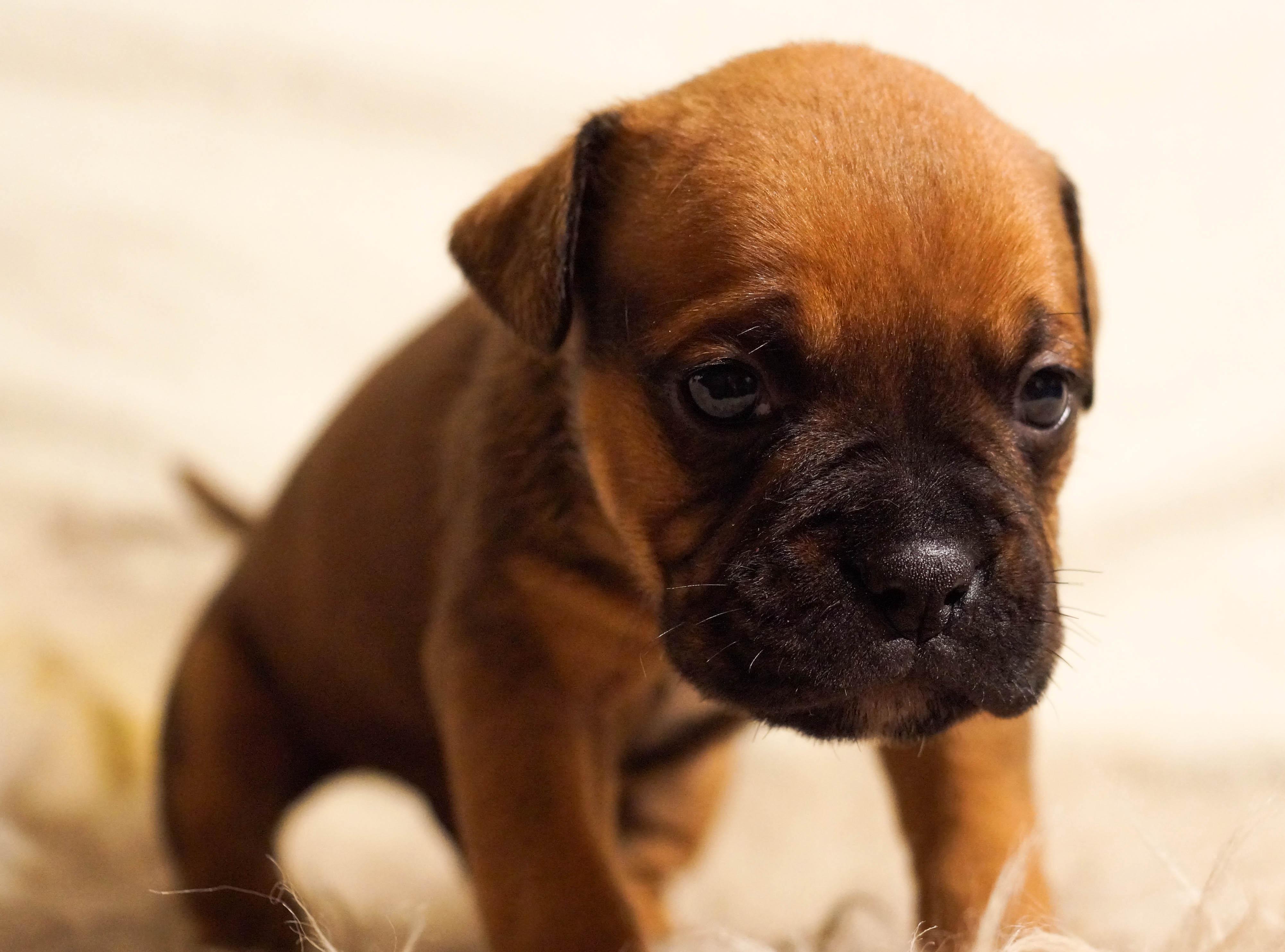 Comment choisir la race de chien?