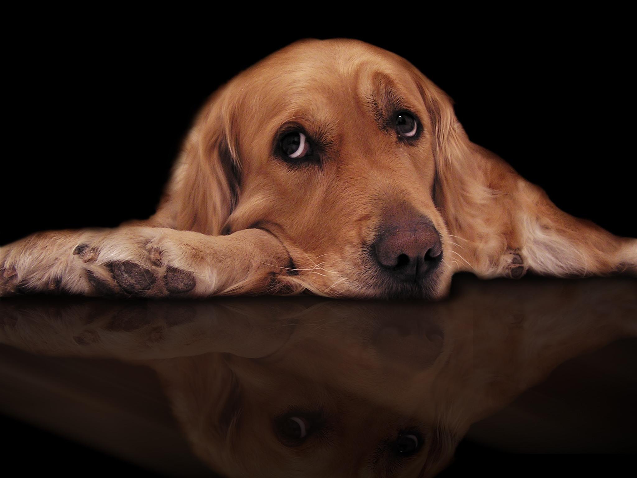 Mon chien s'ennuie : À L'AIDE!